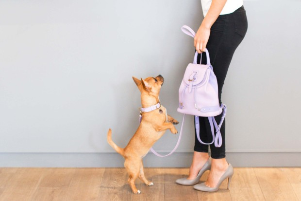 Dog-collar-lilac-small-medium-meli-melo